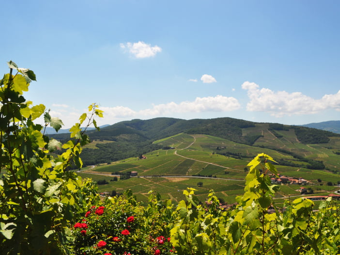 Mont Brouilly